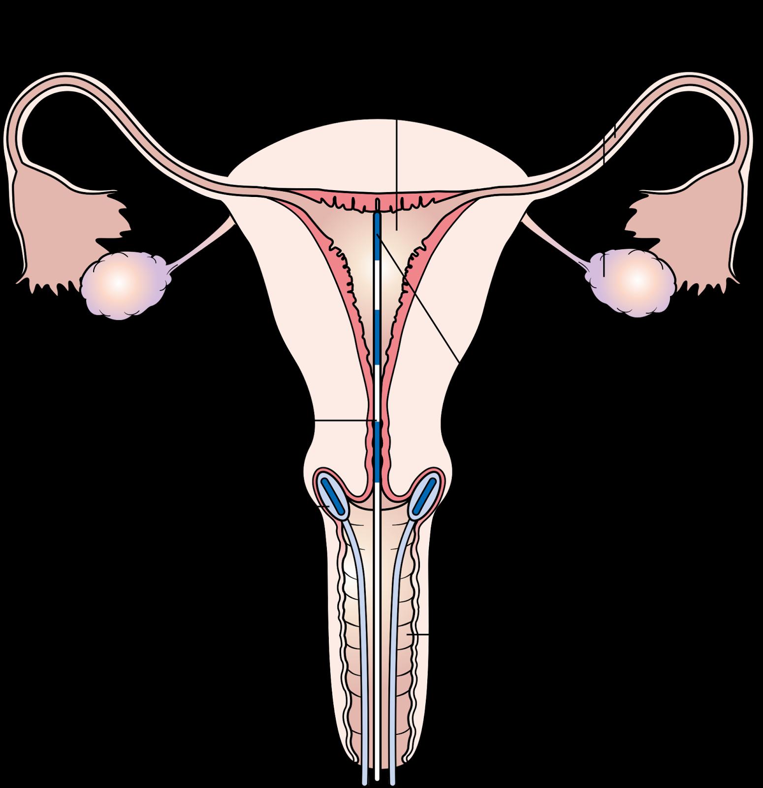 Cock In Cervix