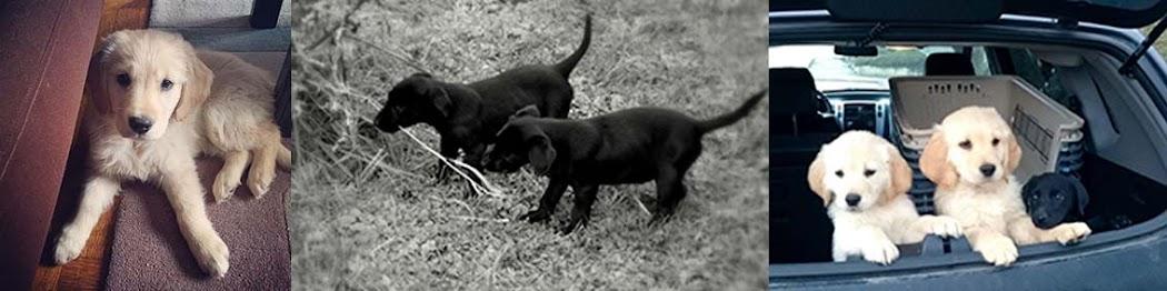 Handi'chiens Vouzinois