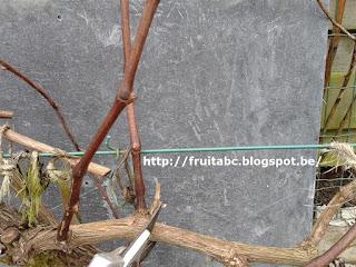 planten snoeien pdf