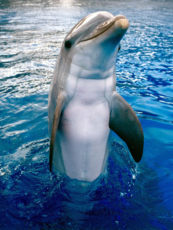 delfin 5