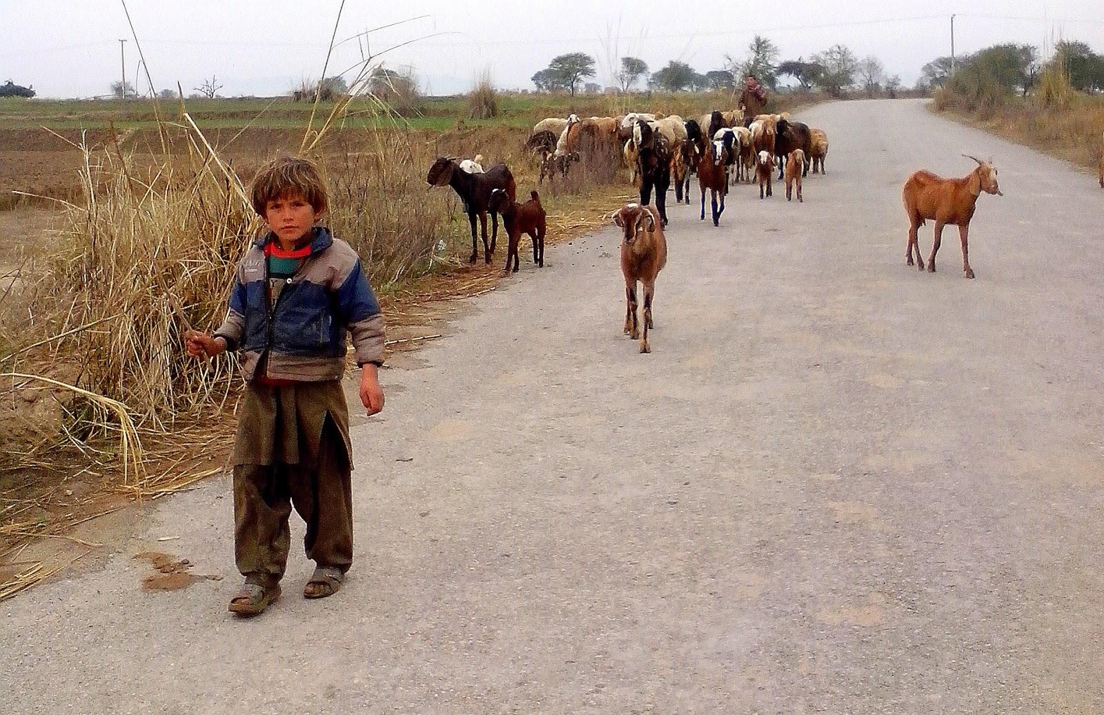 goatherd-boy-pakhtun-pakistan