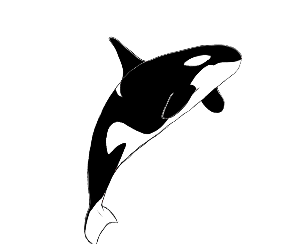how to draw a killer whale draw central