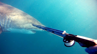 Pic from video - 'Great White comes too Close'