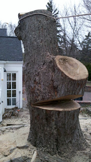 Final cut to bring down a silver maple tree in Omaha. Photo by Dan Sundermeier of American Arborist tree care provider.