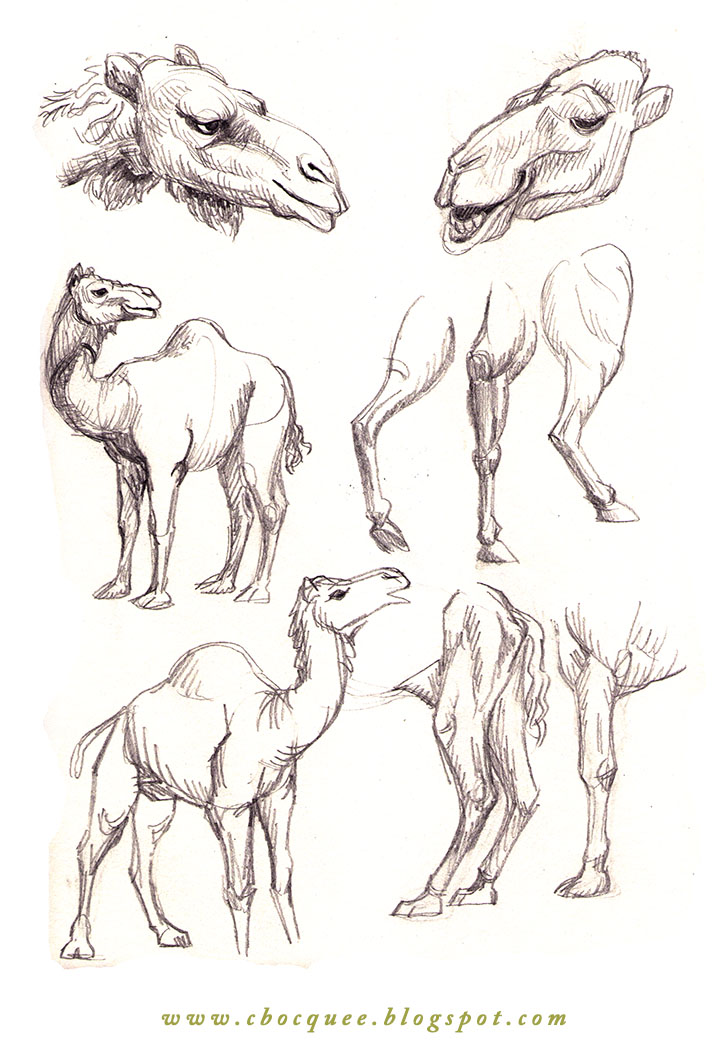 Sketchbook drawings of camels