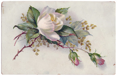 Vintage Rose White