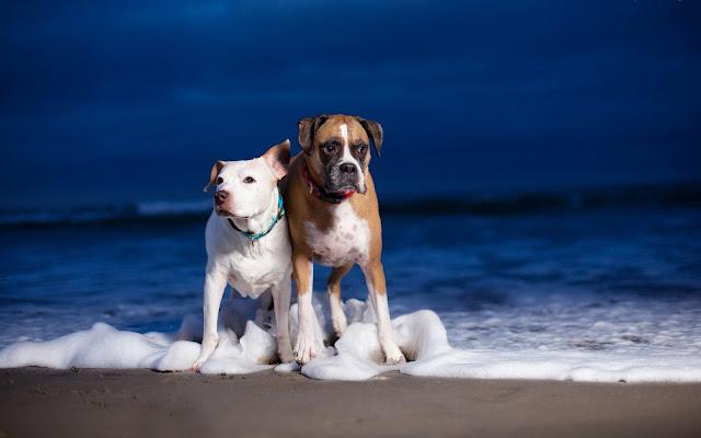 Foto met twee honden op het strand in de branding van de zee