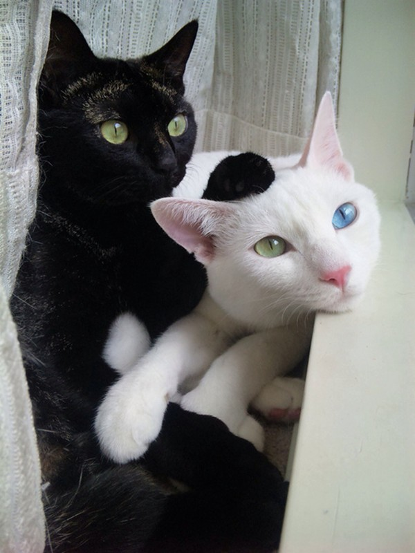 funny cat pictures, brother cats