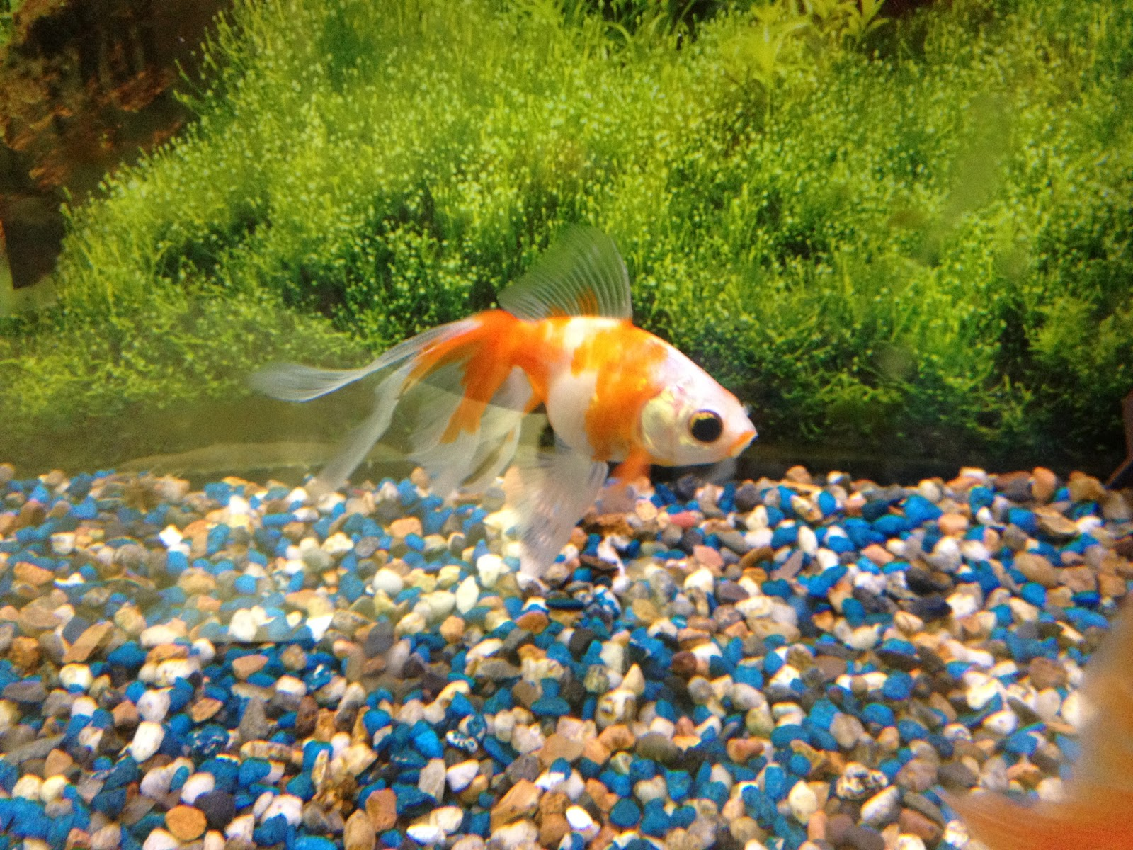 Apples of your eye classroom pets fish edition for Fish for pets