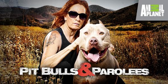 shows pitbulls parolees about this show bulls