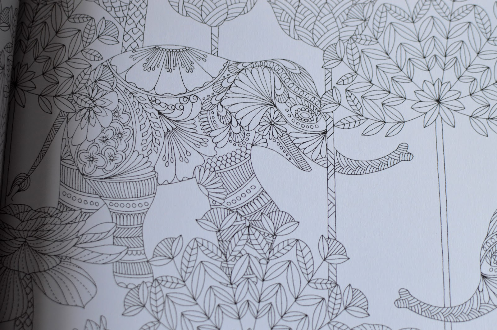 Millie Marottas Tropical Wonderland A Colouring Adventure Book