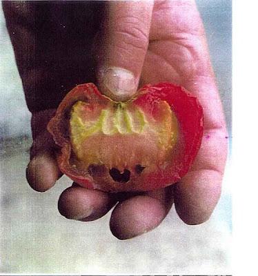 http://4.bp.blogspot.com/-hycoSlWZK7s/T3kmqbA33-I/AAAAAAAABPM/2qOWZDNfF9g/s1600/tomat.jpg