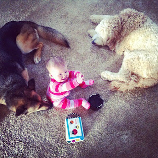 German Shepherd, Goldendoodle and baby