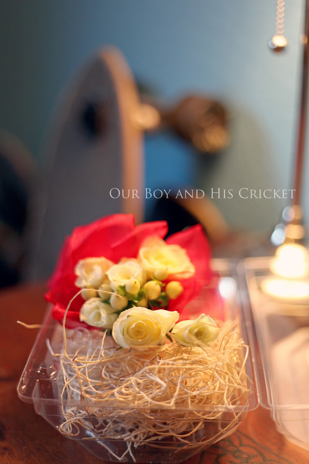 February 2012 ~ Our Boy and His Cricket