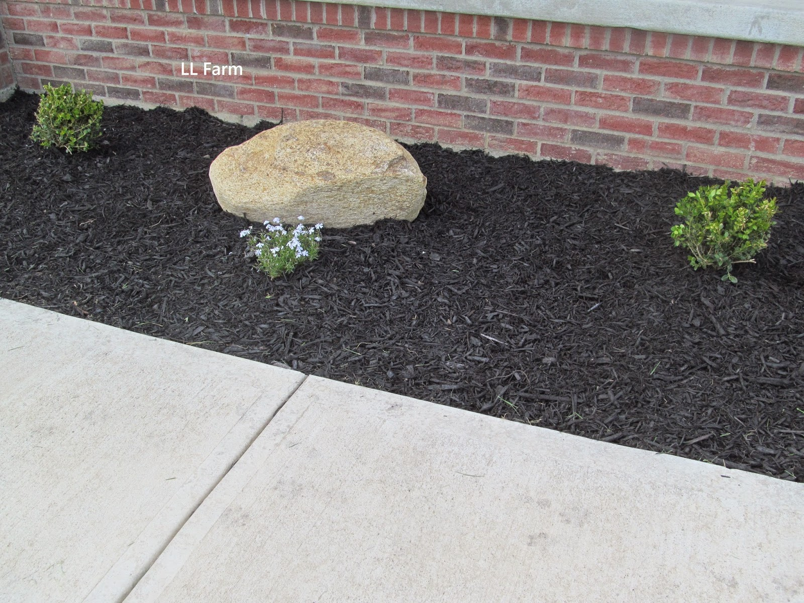 Ll farm landscaping the cheap and free way for Cheap bushes for landscaping