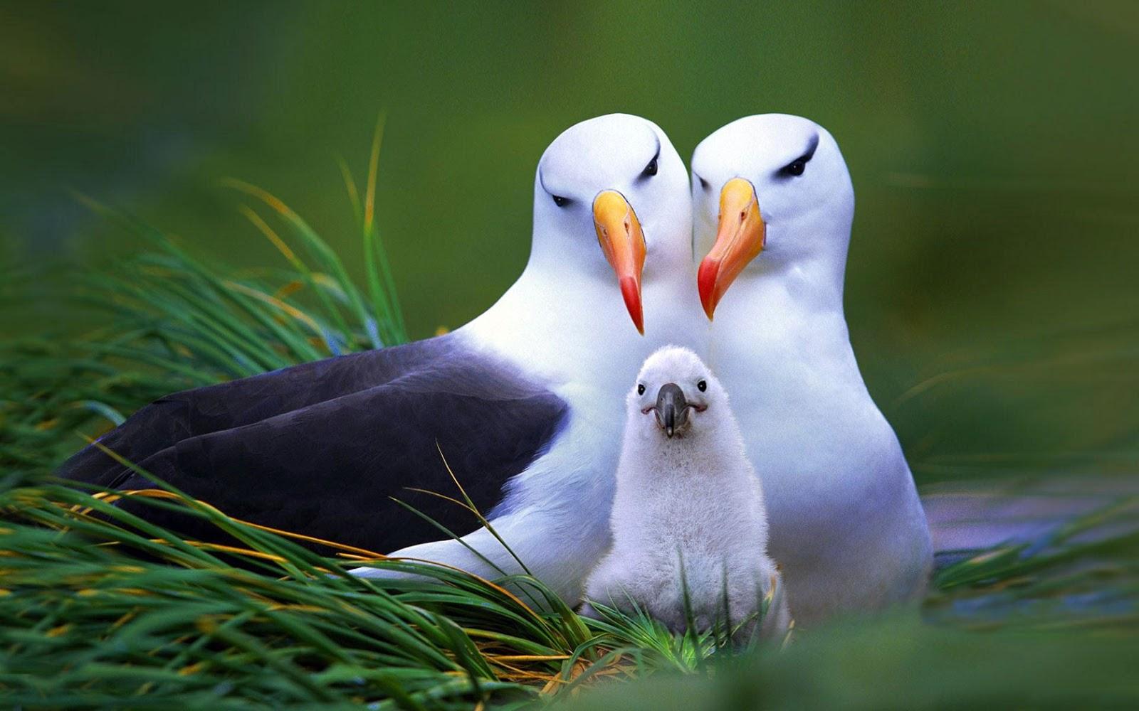 Bird Honey Family