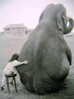 niña y elefante sentados
