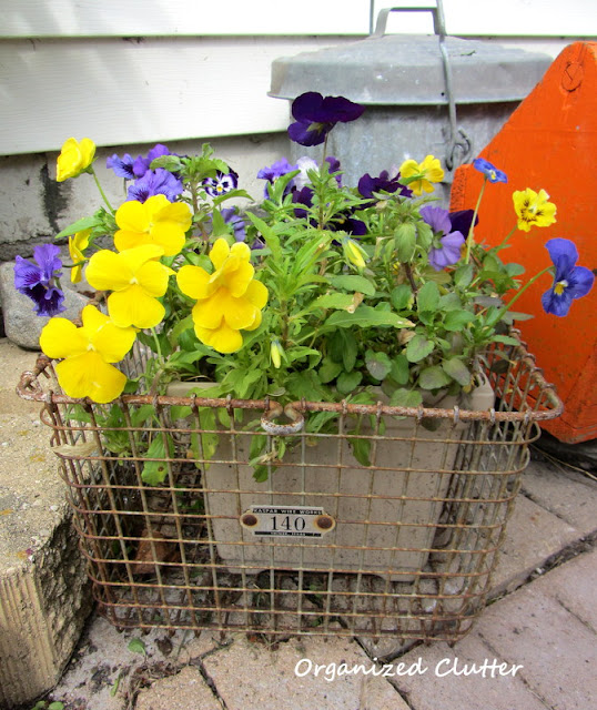 Pansies in a gym basket