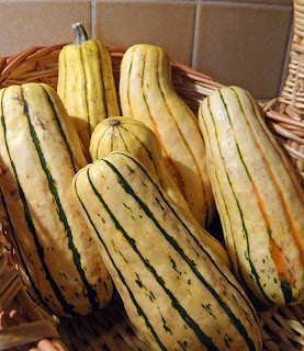 Six Delicata Squash in Basket