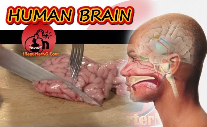 Health: Brain's taste secrets uncovered