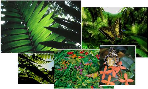 Floresta Amazónica