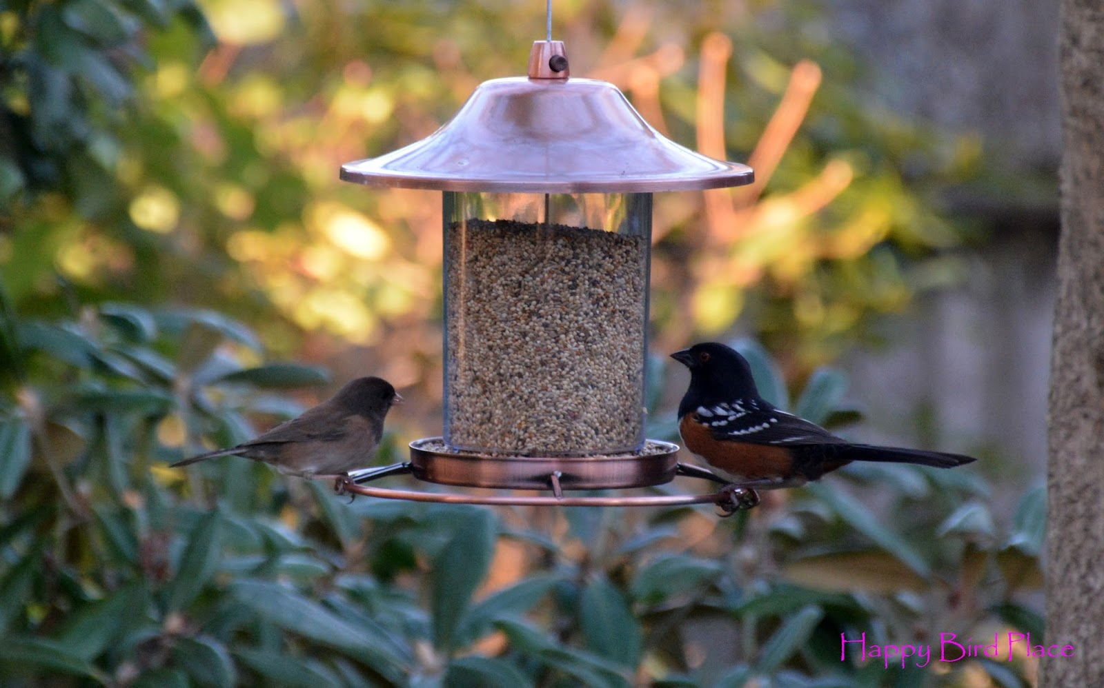 happy bird place finch and grasskeet blog backyard birds at my