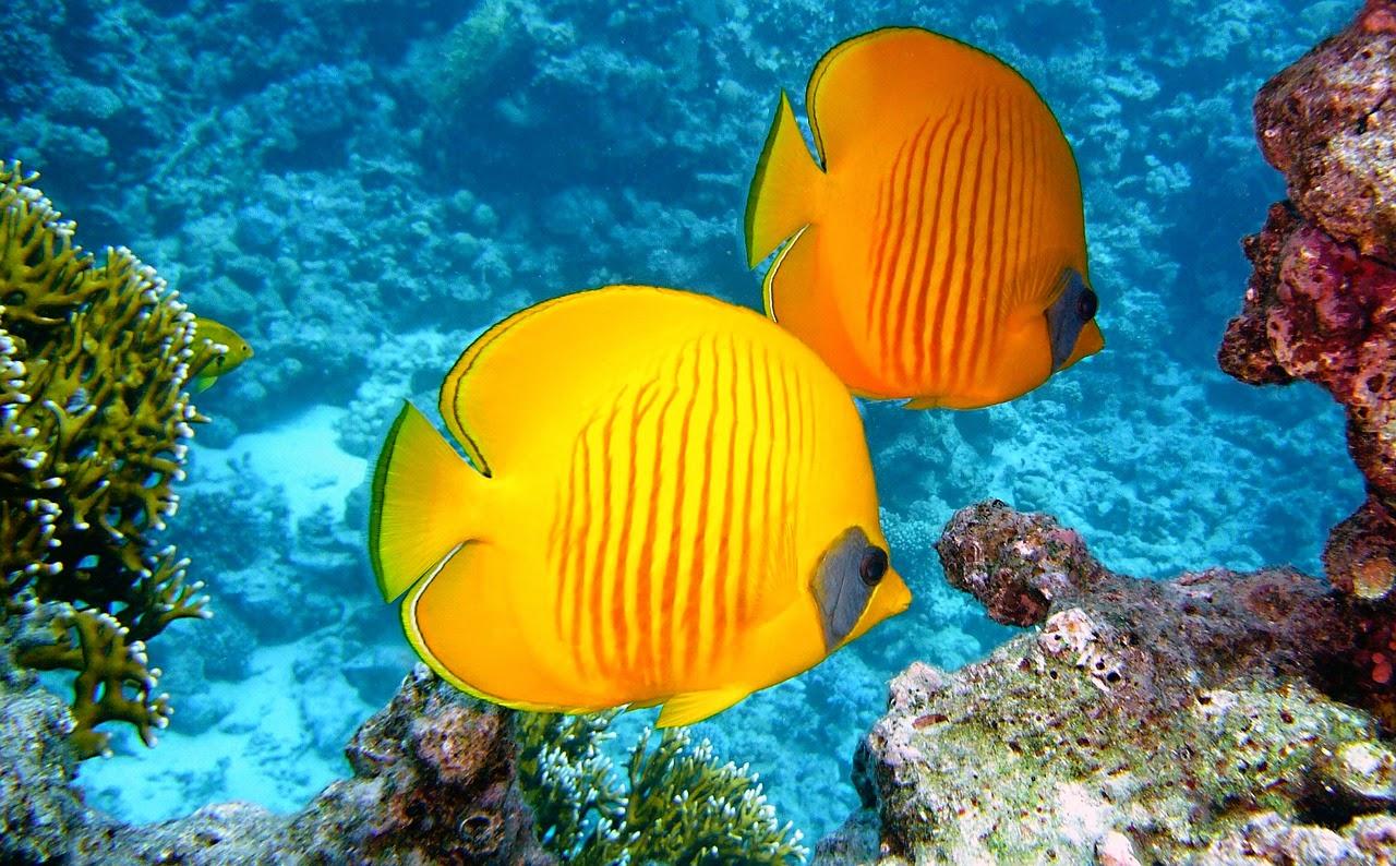 Nadar contra la corriente del mundo reflexiones cortas for Nadar contra la corriente