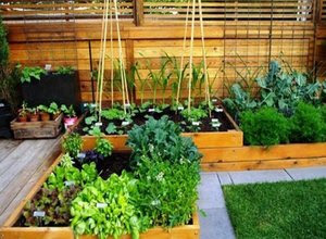 tanaman-pekarangan-rumah.jpg