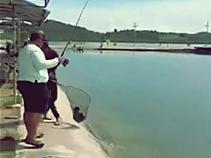 Gila Mancing Ikan Kerapu Kertang Di Kolam Pemancingan Air Laut Batam