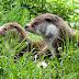 Otterpopulatie opnieuw gegroeid