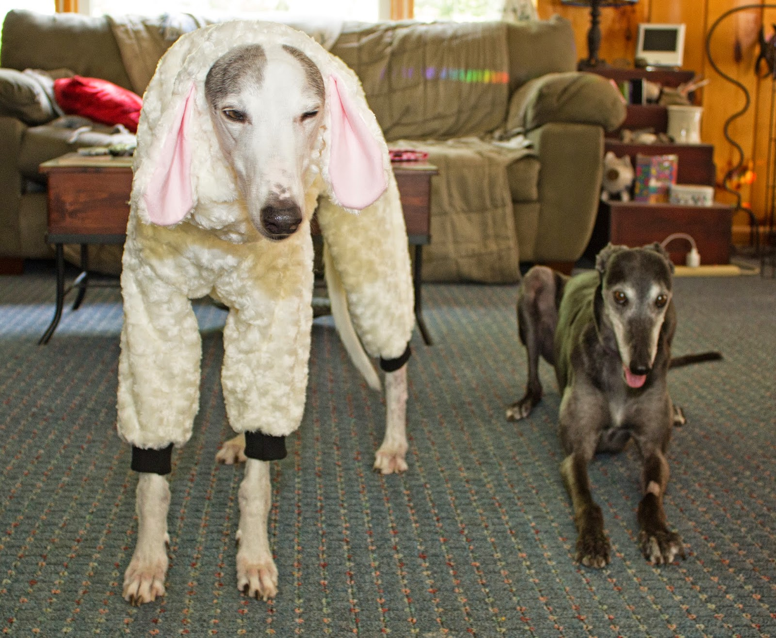Blue the sheep and Bettina greyhound