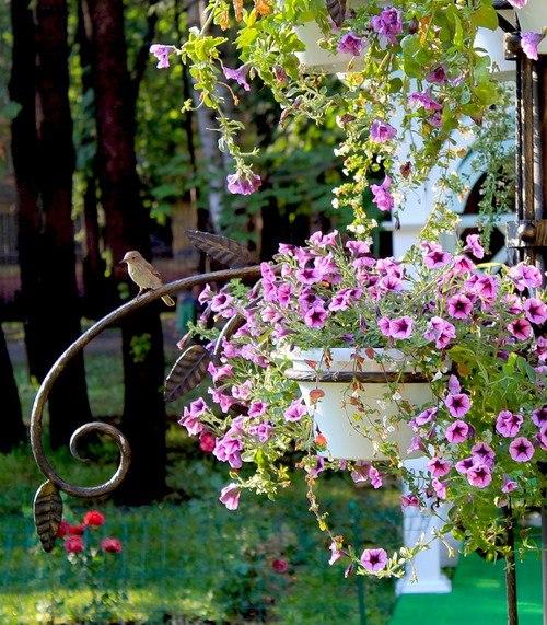 Querido Refúgio  Blog de decoração Um jardim cheio flores