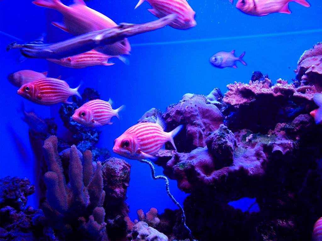 June is national aquarium month celebrate in pink pink for Pink fish tank