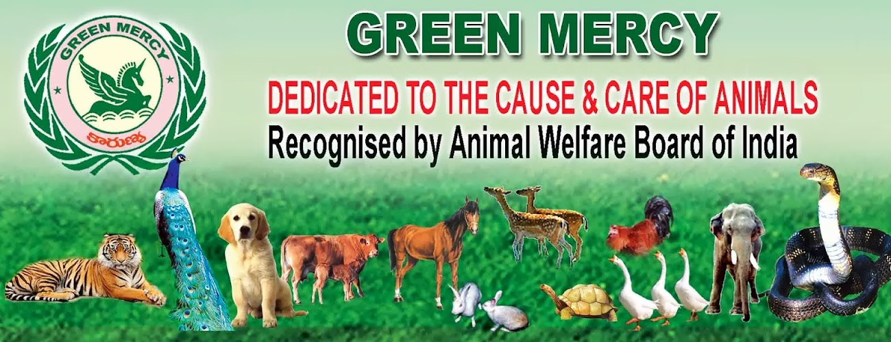 GREEN MERCY