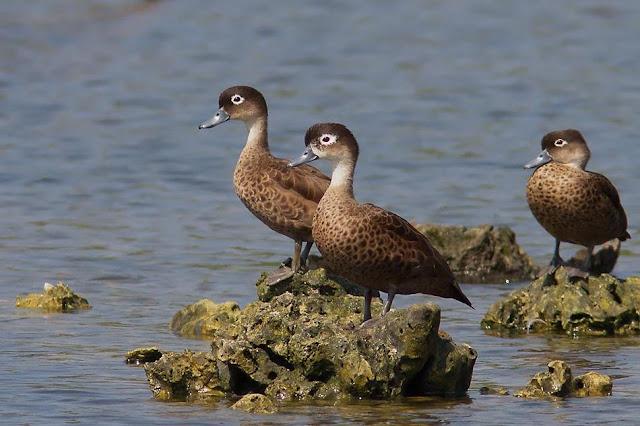 Andaman Endemic Birds