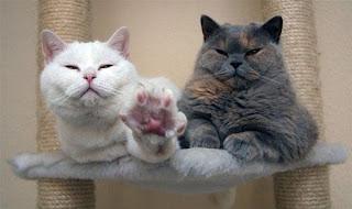 Cara Mengusir Kucing