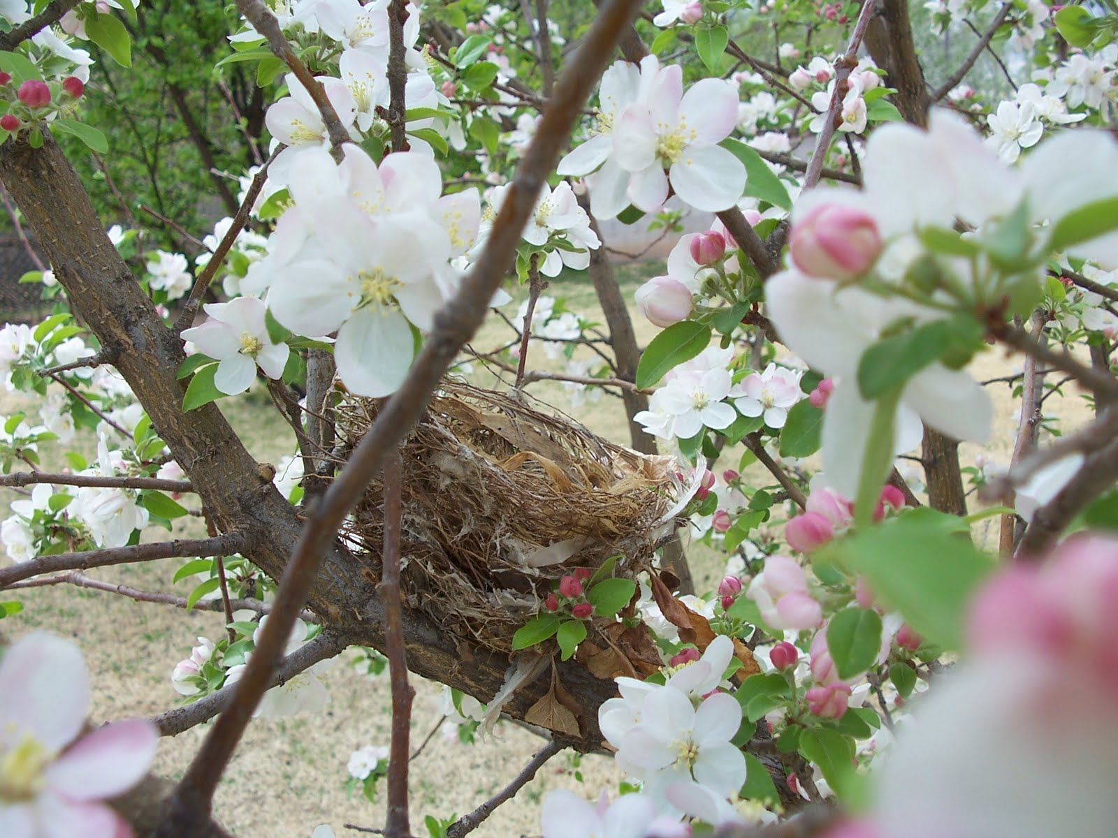 personality is preferred spring bird u0027s nest