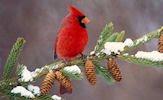 Aves exóticas de colores en el paraíso