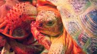 Répteis: tartaruga