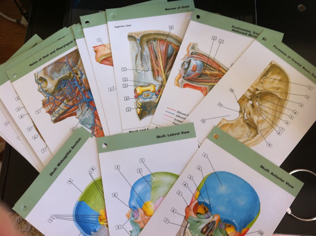 Netter's Anatomy Flash Cards: with Online Student Consult Access, 3e ...