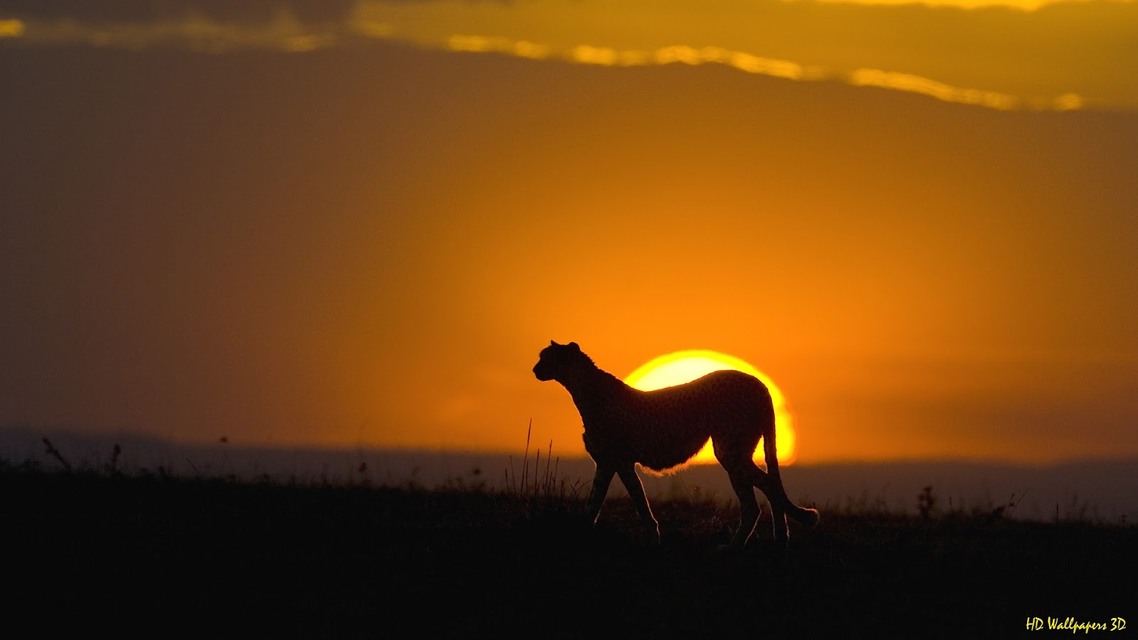Simple   Wallpaper Horse Sunrise - hd+wallpapers+3d(33)  You Should Have_644976.jpg