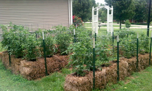 growing plants in hay bales Plant your garden in straw bales. Even if you have to buy the straw ...