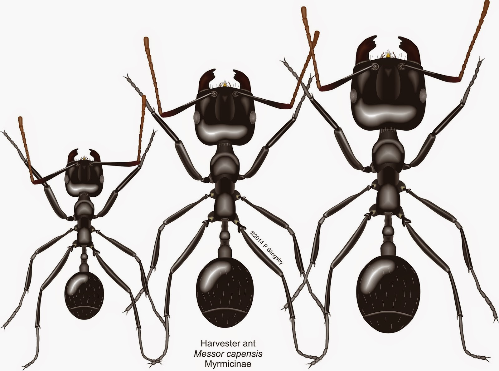 ants of southern africa under construction