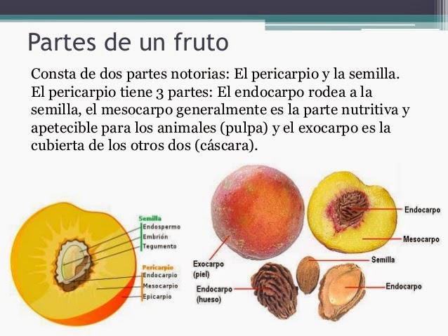 B g forever reino plantas informaci n complementaria for Cuales son los tipos de plantas