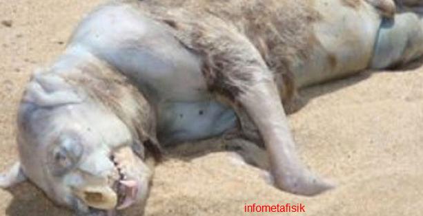 makhluk aneh mirip unicorn di pantai spanyol