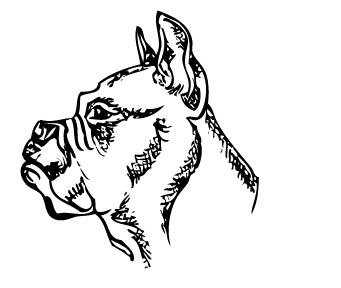 Royalty free vector clip art boxer dog profile