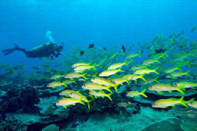 Tips Scuba Diving (Menyelam)