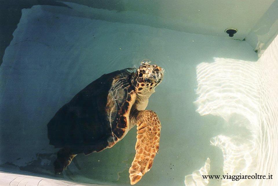 Lampedusa un 39 indimenticabile esperienza di volontariato for Vasche per tartarughe marine