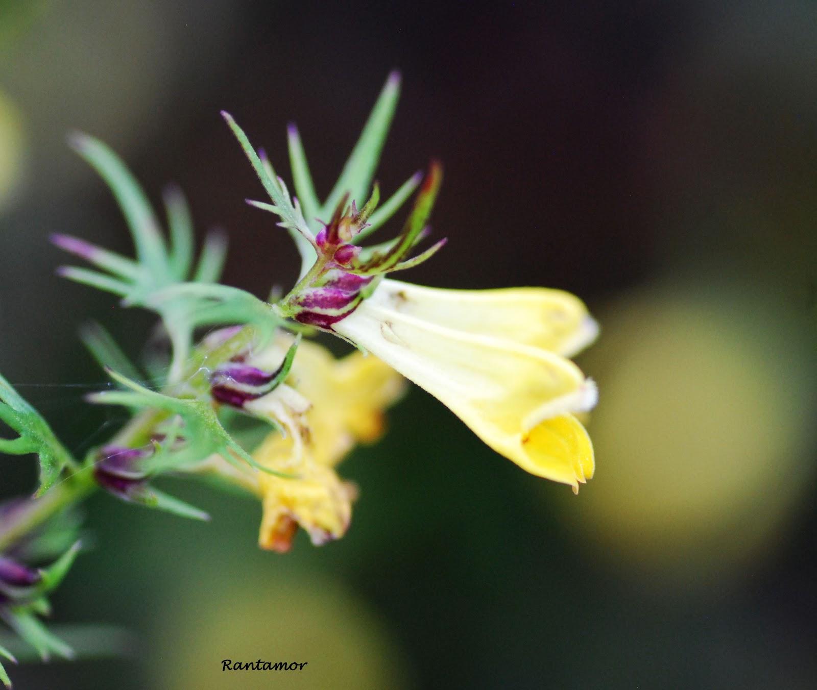 På näthinnan: med mactamron i min trädgård....