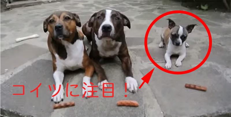 1匹の犬の暴挙に、一同困惑する「待て」の時間